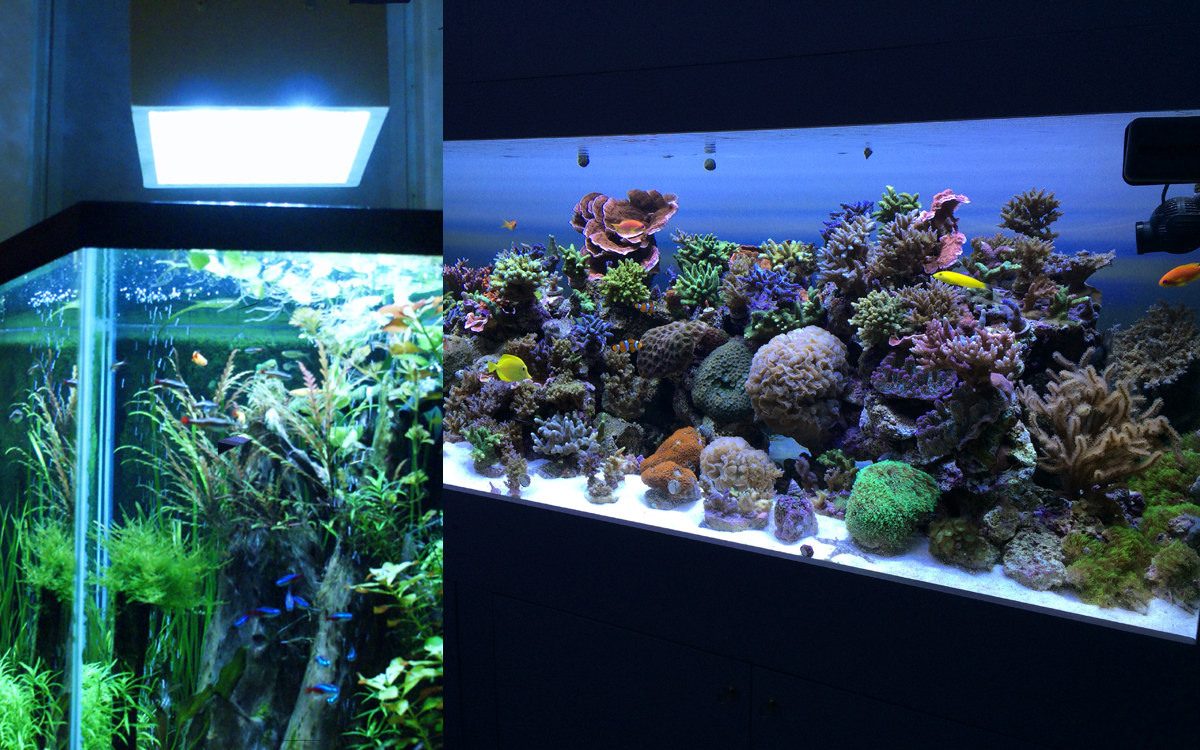 Fish tank vs aquarium - Grobeam 1500 Planted Aquarium Lighting Reef White 2000 Over Reef Tank