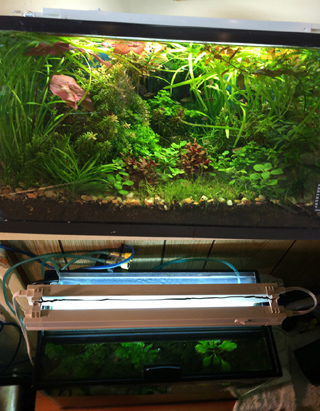 10 Gallon Planted Aquarium Lighting, T2 Light side & top view