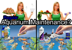 aquarium maintenance for basic beginner to advanced fish tank
