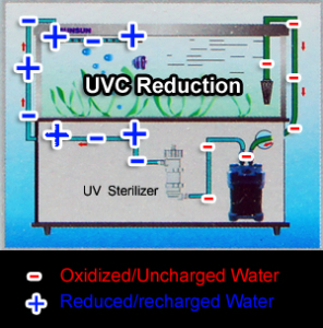 UVC sterilizer health aquarium basics beginner to advanced